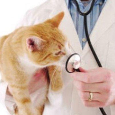 Прививки кошкам: вакцинация