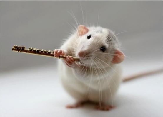 Музыкальный для самых маленьких цыпленок пи