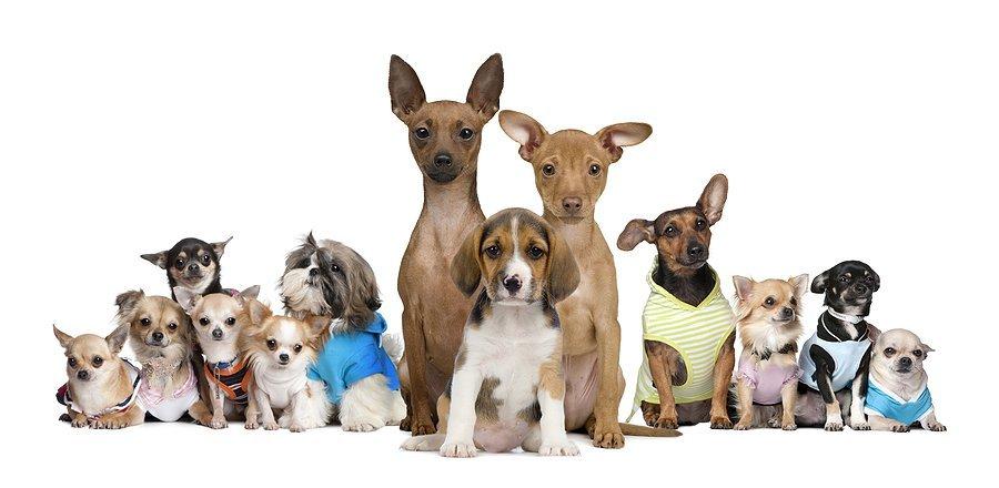 Разместить о покупке объявление о товарах для собак дать объявление прорыву